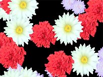 Blossoming Flowers Screensaver