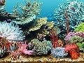 Tropical Sea Life Screensaver