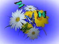 3D Wonderful Flowers